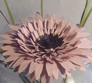 Gerbera_daisy_close